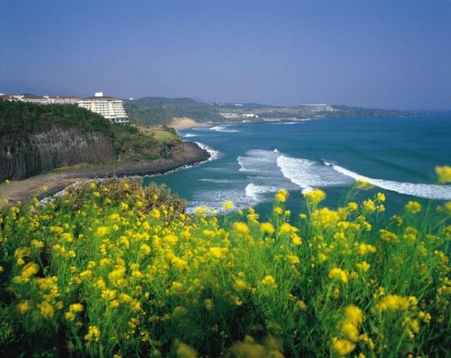 Pemandangan indah dari atas tebing di Pulau Jeju, Korea Selatan